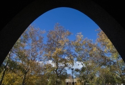 Trees and blue sky seen from Chifley Library